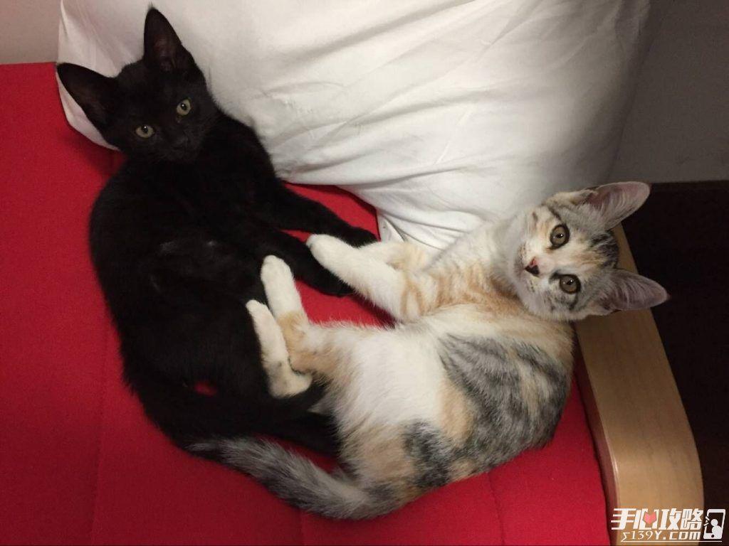 《吸猫小姐姐》:一款由两位猫奴创作并获得了苹果全球首页新游推荐的独立游戏2