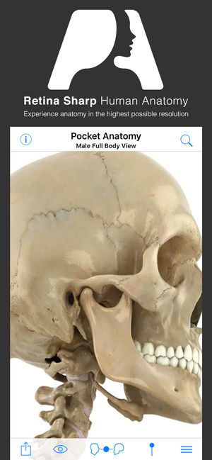 Pocket Anatomy