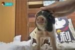 《小森生活》一个养猪游戏?探访动物世界